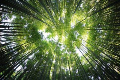 Bäume von unten fotografiert